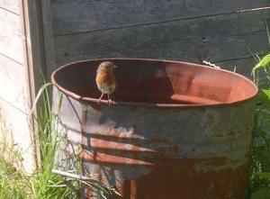 A plot robin