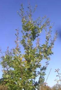 tree-following-nov16-1