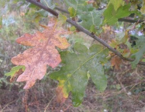 tree-following-nov16-3